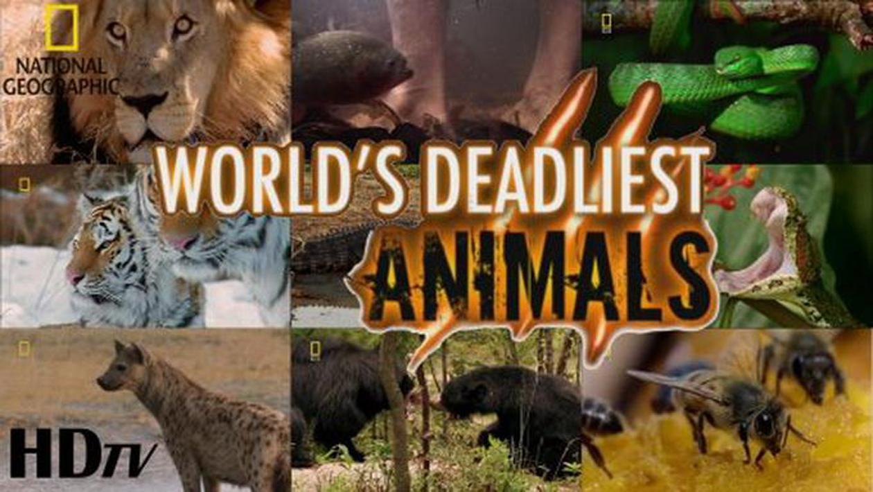 Worlds Deadliest Animals - Những Động Vật Nguy Hiểm Nhất Thế Giới
